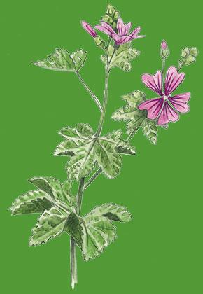 Esthetique-et-botanique