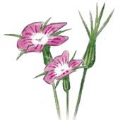 Plantes-mediterranéennes