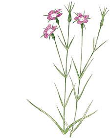 plantes-vivaces