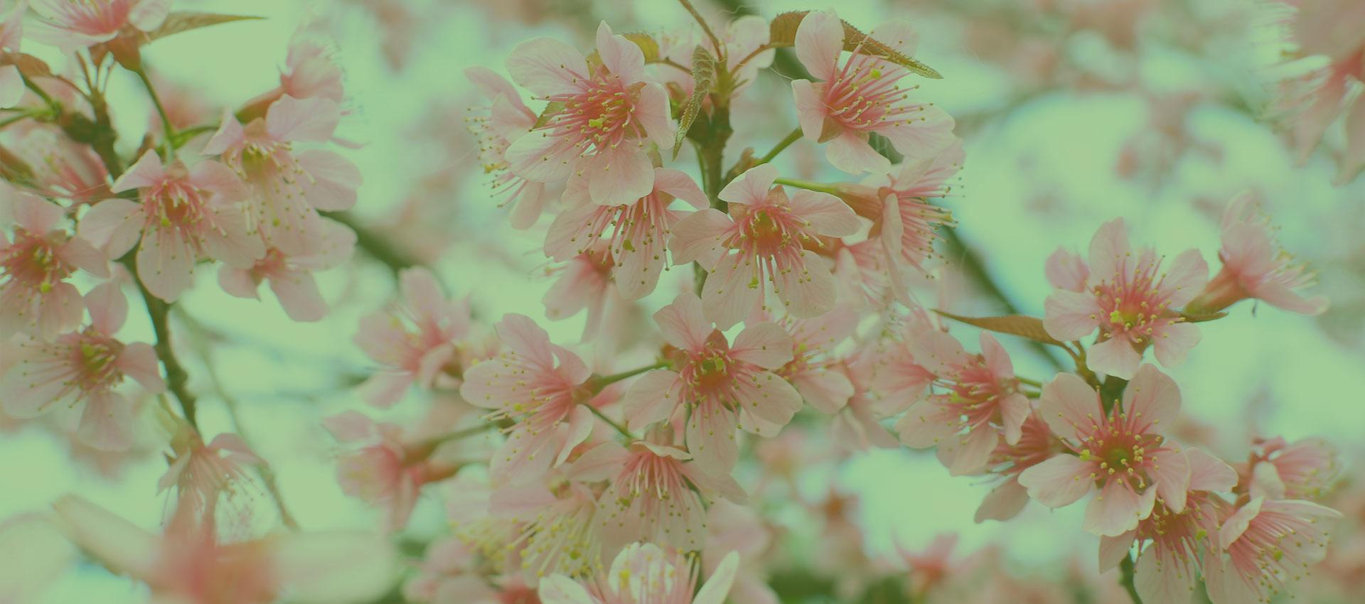 fleursdusud